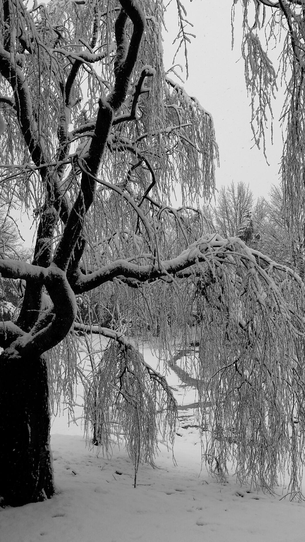 Weather: Cee's Black & WhiteChallenge