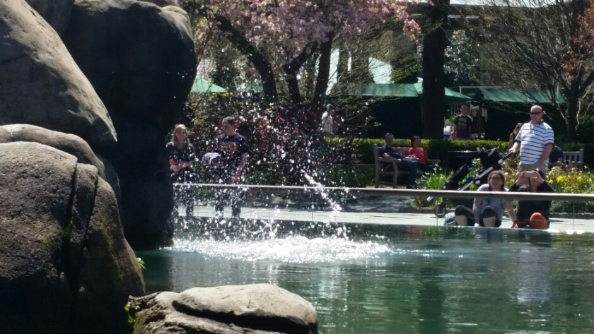 Sea lion splashes into the water at the central park z