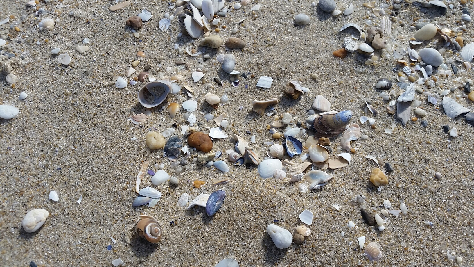 Shells in the sand on a sunny